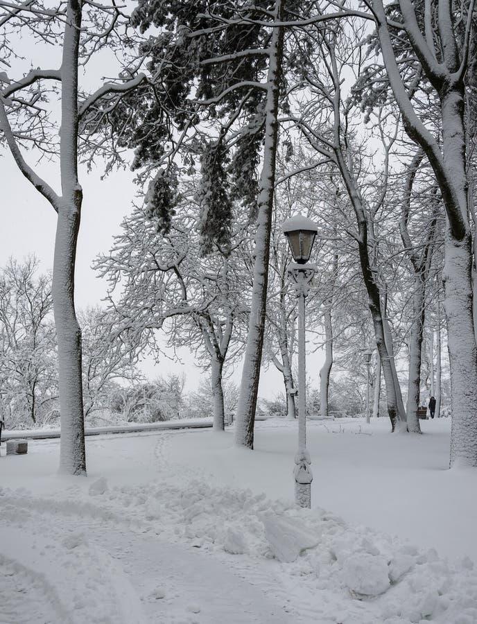 Parque no tempo nebuloso após uma queda de neve Lâmpada Árvores neve imagens de stock royalty free