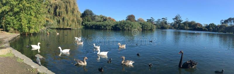 Parque ocidental das molas em Auckland Nova Zelândia imagem de stock royalty free