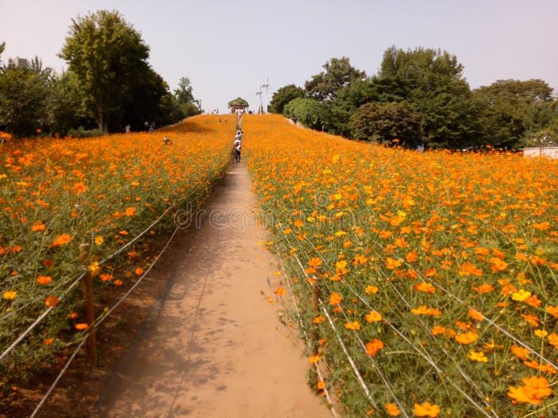 Parque olímpico de Seul imágenes de archivo libres de regalías