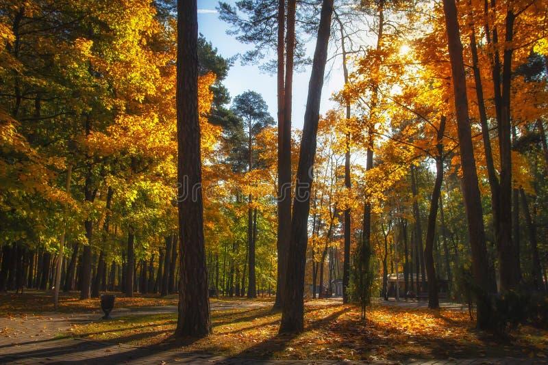 Parque otoñal Caída Naturaleza colorida del otoño en parque soleado Paisaje asombroso con luz del sol brillante Bosque vibrante d imagen de archivo