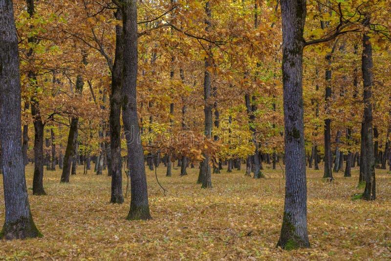 Parque otoñal hermoso Escena de la naturaleza de la belleza Paisaje del otoño, árboles y hojas, bosque de niebla fotos de archivo libres de regalías