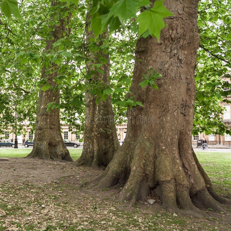 Parque público com árvores velhas O circo, banho, Somerset, Reino Unido foto de stock royalty free