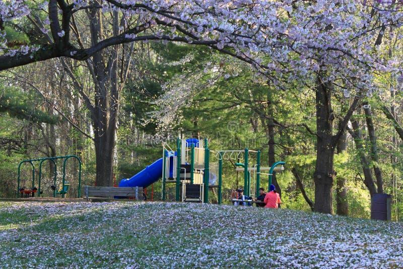 Parque público en primavera fotografía de archivo