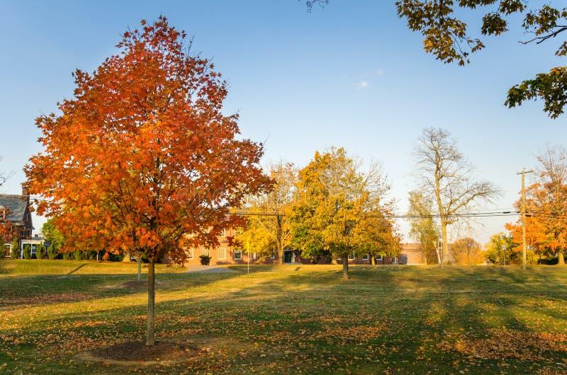 Parque público no outono sob o céu claro foto de stock