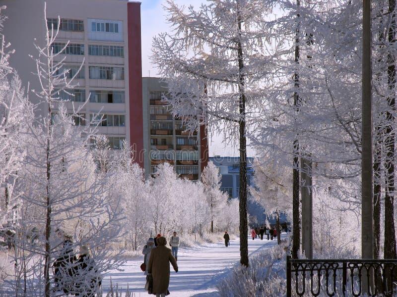 Parque. Paisaje del invierno de la naturaleza. imagen de archivo libre de regalías