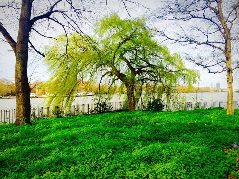 Parque pelo rio imagem de stock royalty free