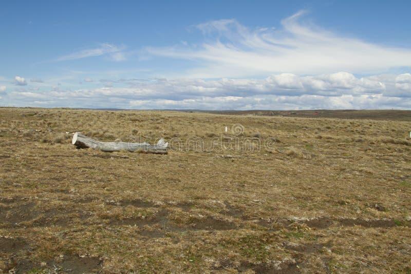 Parque Pinguino Rey - parco di re Penguin su Tierra del fueg fotografia stock libera da diritti