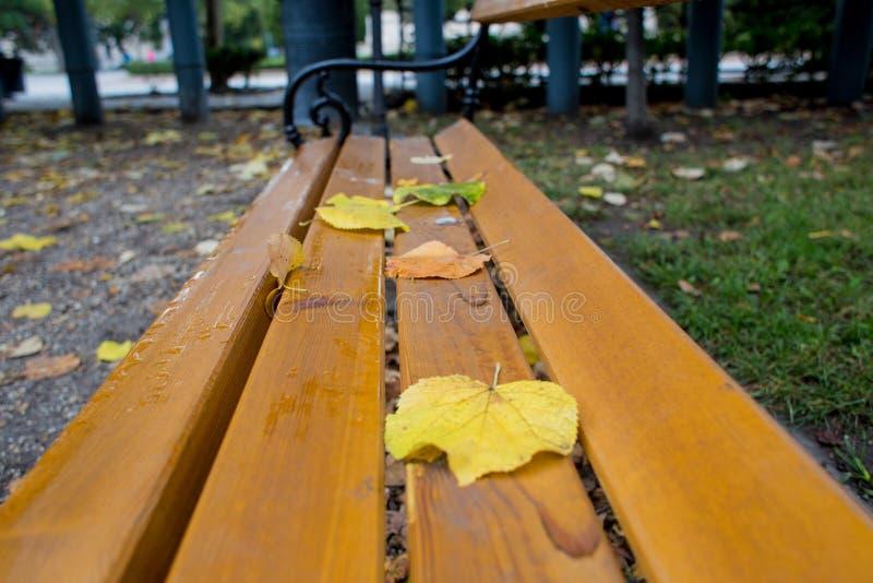 parque pintado folhas do banco do amarelo foto de stock