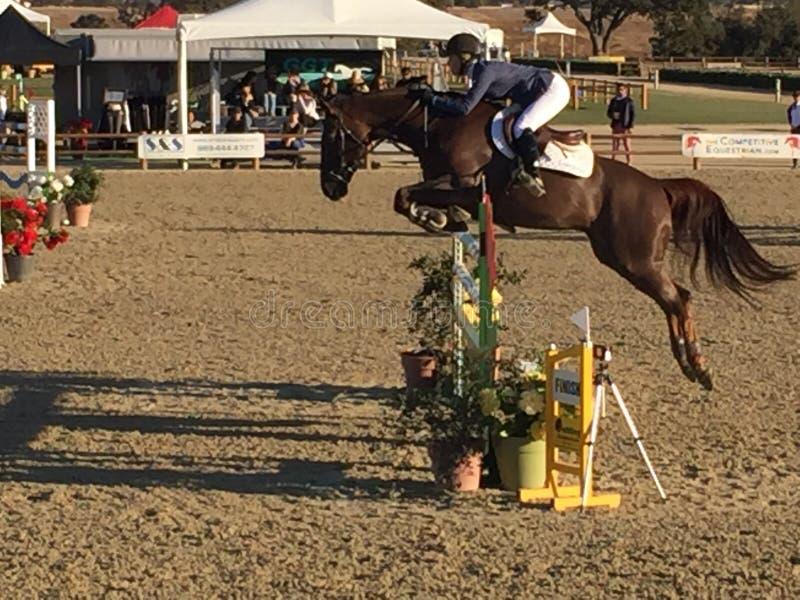 Parque Prix grande do cavalo de Paso Robles que salta - em novembro de 2017 foto de stock royalty free