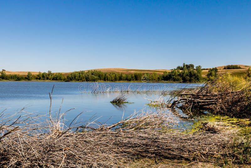 Parque provincial do lago pequeno fish, lago pequeno fish, Alberta, Canadá fotos de stock royalty free