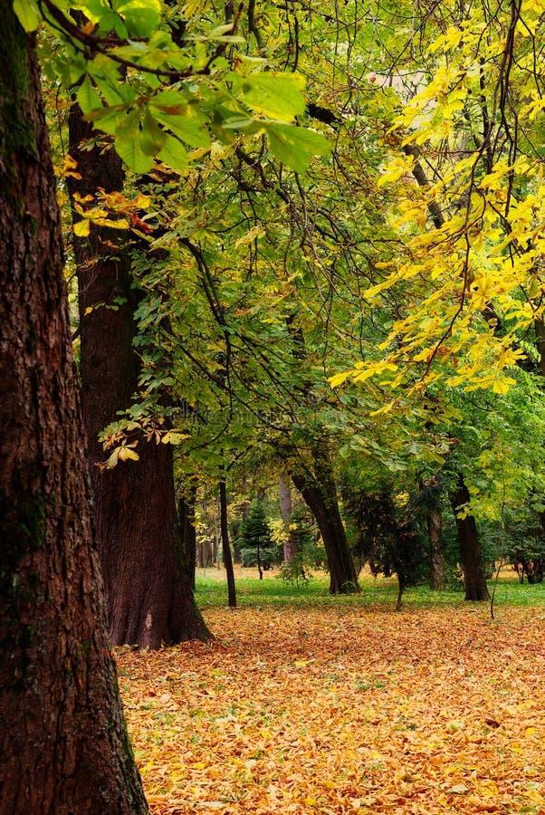 Parque reservado hermoso en el otoño fotos de archivo