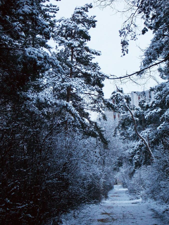 Parque Tanais Voronezh do inverno imagem de stock