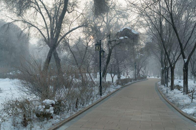 Parque tranquilo del invierno en nieve imagen de archivo libre de regalías