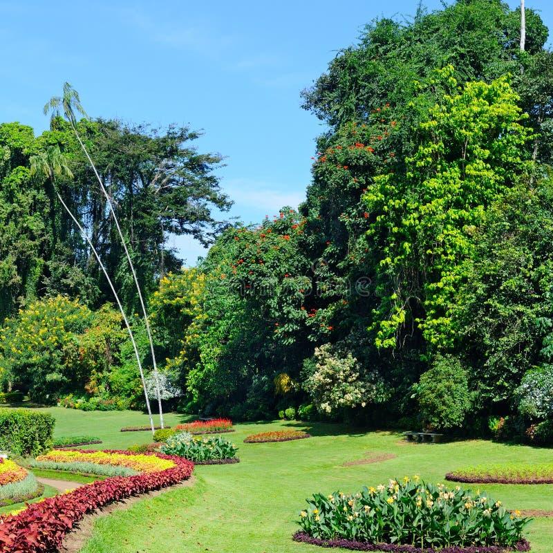 parque tropical con las camas, los céspedes y los árboles de flor imagen de archivo libre de regalías