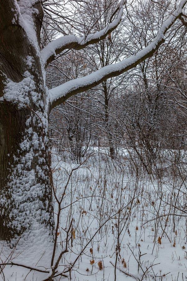 Parque velho da cidade no outono Forest Fog Paisagem fotos de stock