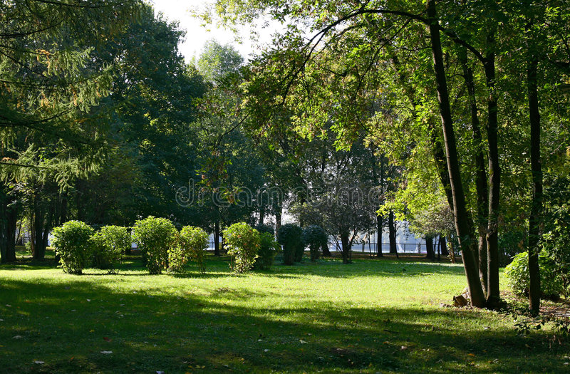 Parque. Verão. fotos de stock