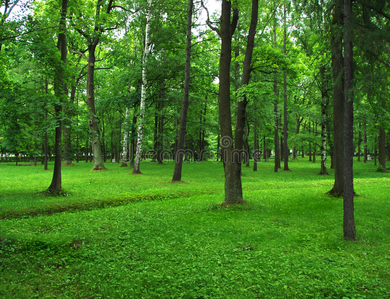 Parque verde imagem de stock