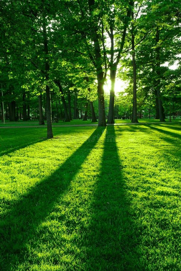 Parque verde imagens de stock