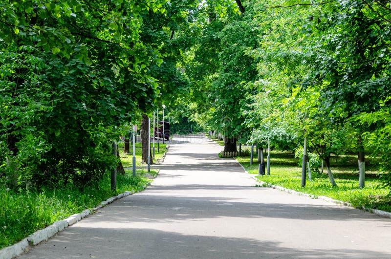 Parque verde com aleia imagens de stock royalty free