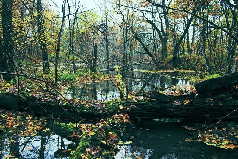 Parque viejo abandonado con una charca, corrientes, árboles antiguos, bancos del jardín foto de archivo