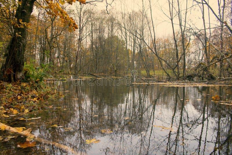 Parque viejo abandonado con una charca, corrientes, árboles antiguos, bancos del jardín imágenes de archivo libres de regalías