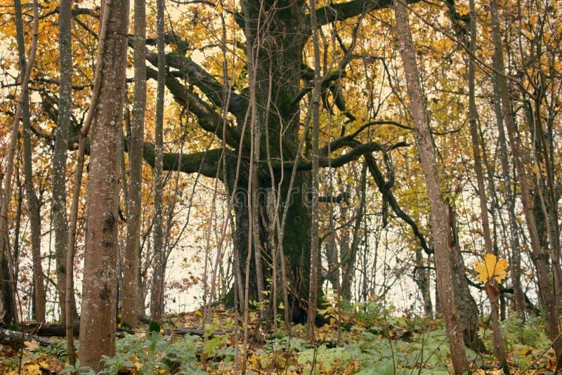 Parque viejo abandonado con una charca, corrientes, árboles antiguos, bancos del jardín imagen de archivo libre de regalías