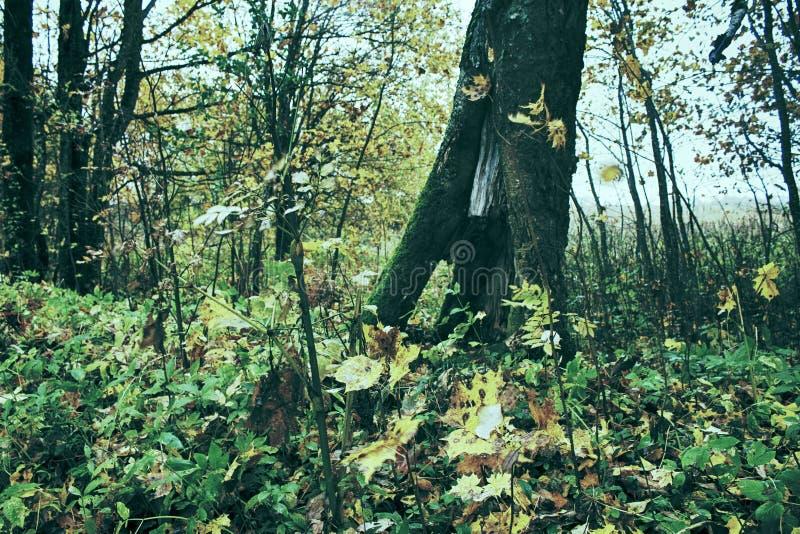 Parque viejo abandonado con una charca, corrientes, árboles antiguos, bancos del jardín imagen de archivo