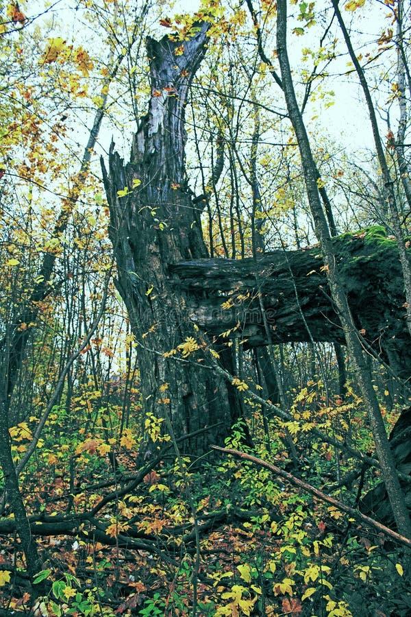 Parque viejo abandonado con una charca, corrientes, árboles antiguos, bancos del jardín fotografía de archivo