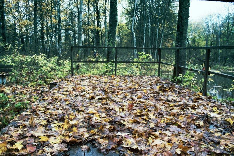 Parque viejo abandonado con una charca, corrientes, árboles antiguos, bancos del jardín imagenes de archivo