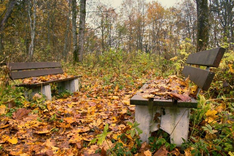 Parque viejo abandonado con una charca, corrientes, árboles antiguos, bancos del jardín fotografía de archivo libre de regalías