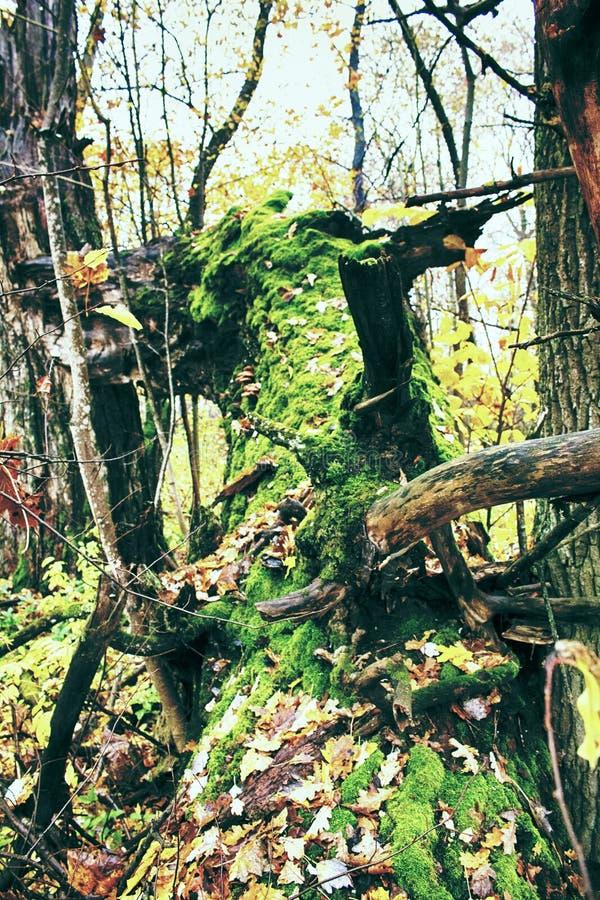 Parque viejo abandonado con una charca, corrientes, árboles antiguos, bancos del jardín foto de archivo libre de regalías