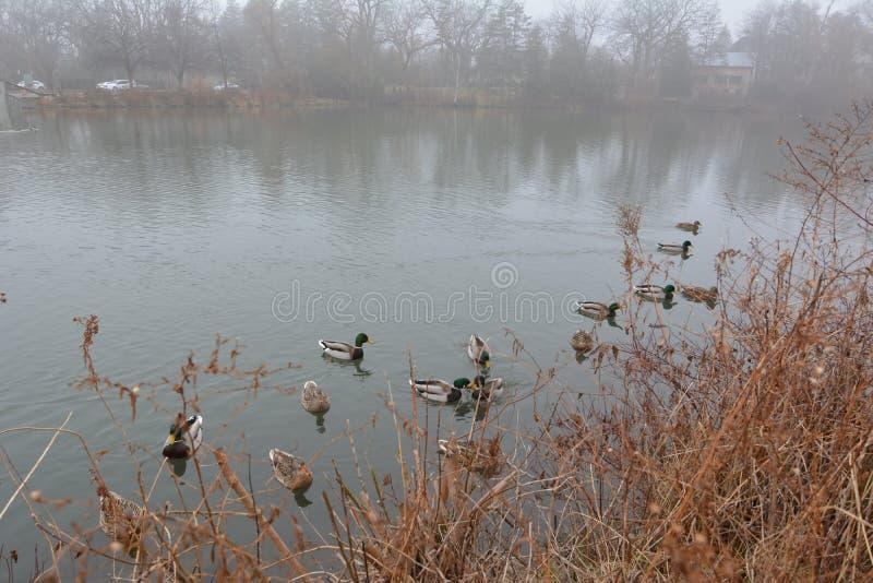 Parque y lago en Richmond Hill en Toronto en Canadá por la mañana en el invierno foto de archivo