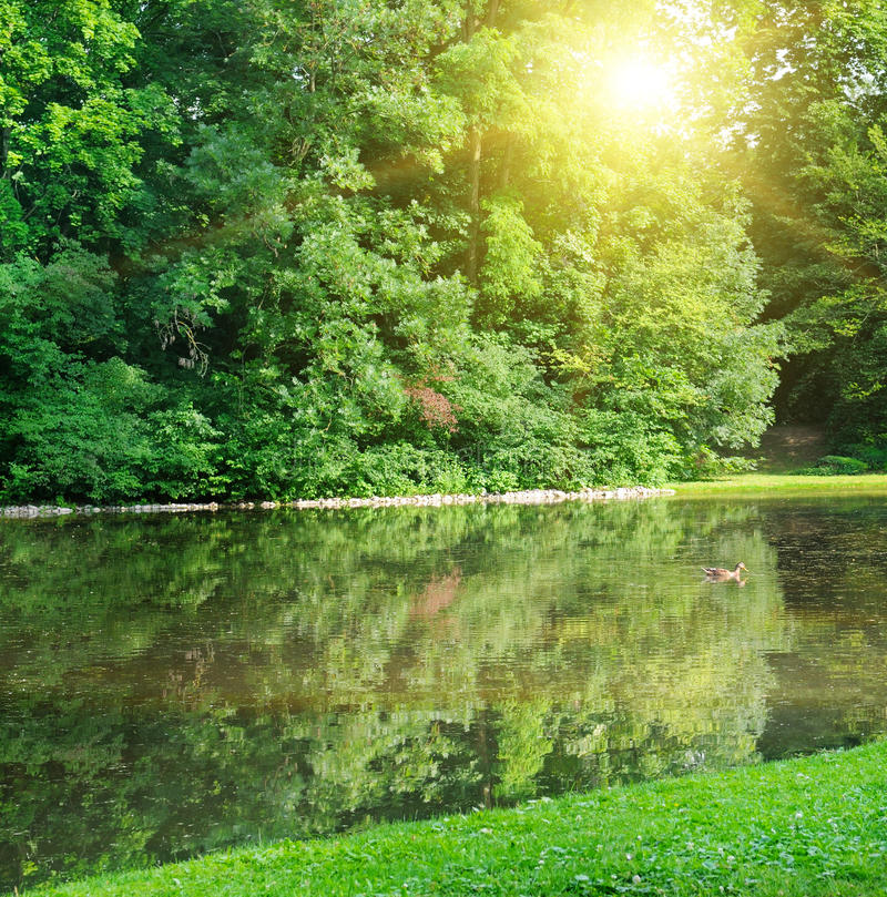 Parque y río del verano imagen de archivo
