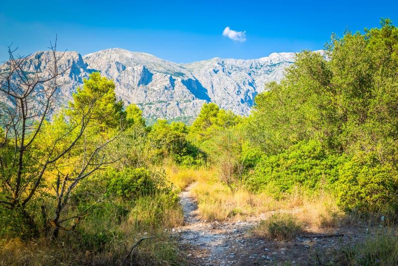 Parque y ?rboles de naturaleza de la monta?a de Biokovo de Makarska Riviera, Dalmacia fotos de archivo