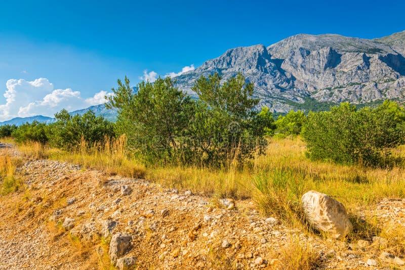 Parque y ?rboles de naturaleza de la monta?a de Biokovo de Makarska Riviera, Dalmacia foto de archivo
