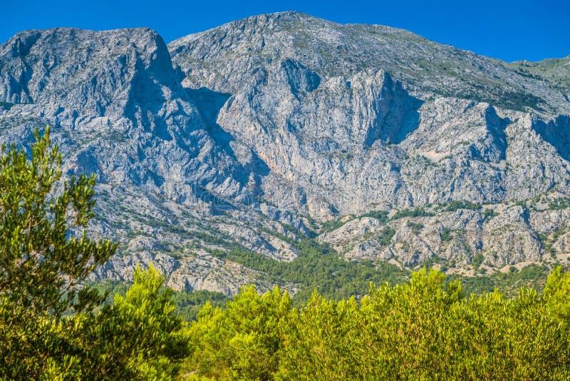 Parque y ?rboles de naturaleza de la monta?a de Biokovo de Makarska Riviera, Dalmacia imagenes de archivo
