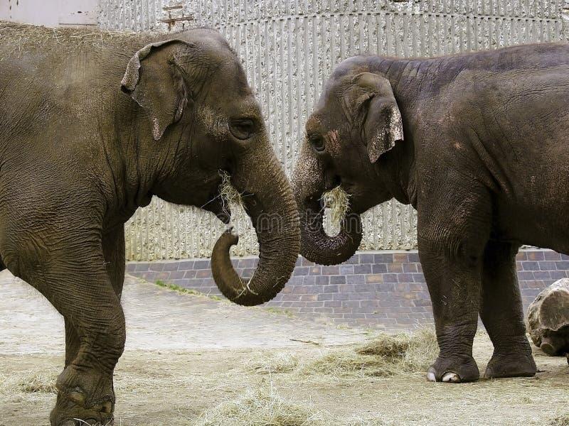 Parque zoológico imagenes de archivo