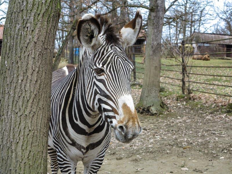 PARQUE ZOOLÓGICO Brno - centro de la fauna fotos de archivo libres de regalías