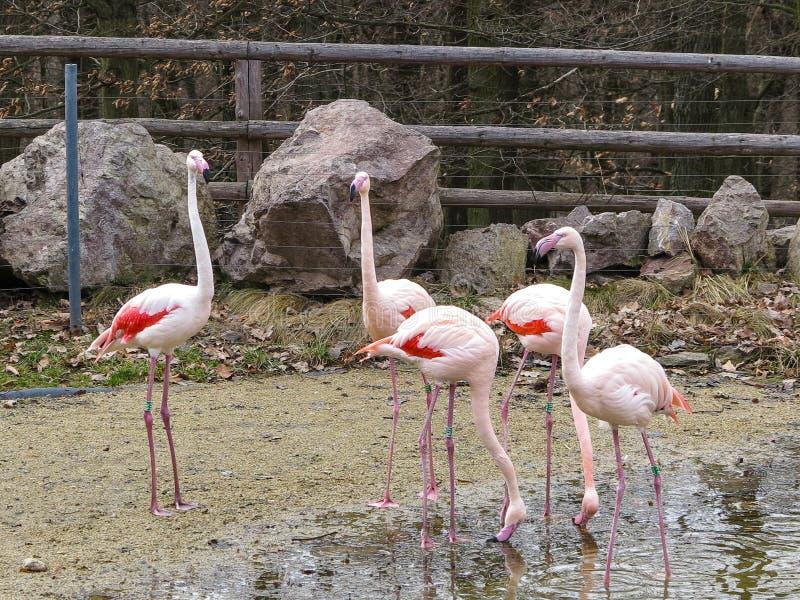 PARQUE ZOOLÓGICO Brno - centro de la fauna imágenes de archivo libres de regalías