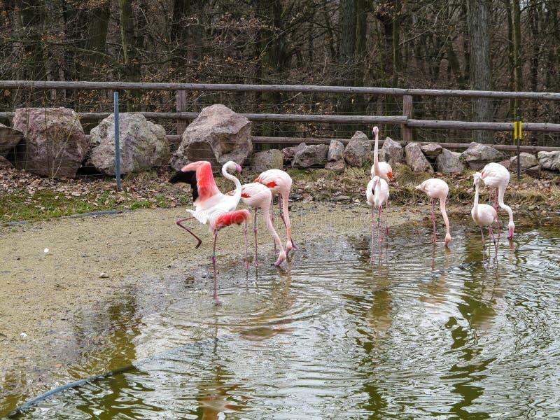 PARQUE ZOOLÓGICO Brno - centro de la fauna imagen de archivo