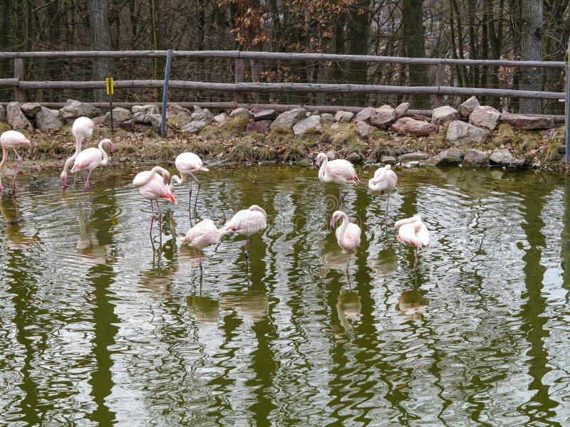 PARQUE ZOOLÓGICO Brno - centro de la fauna fotografía de archivo libre de regalías