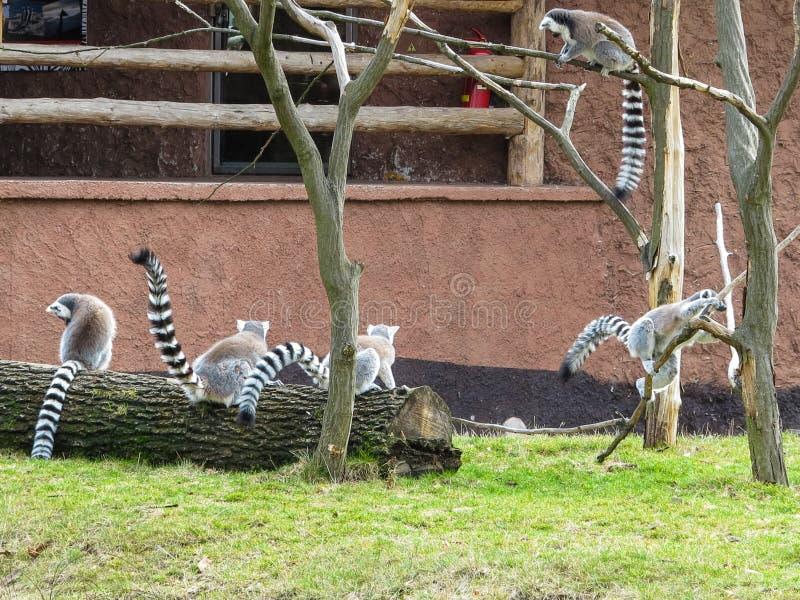 PARQUE ZOOLÓGICO Brno - centro de la fauna foto de archivo libre de regalías