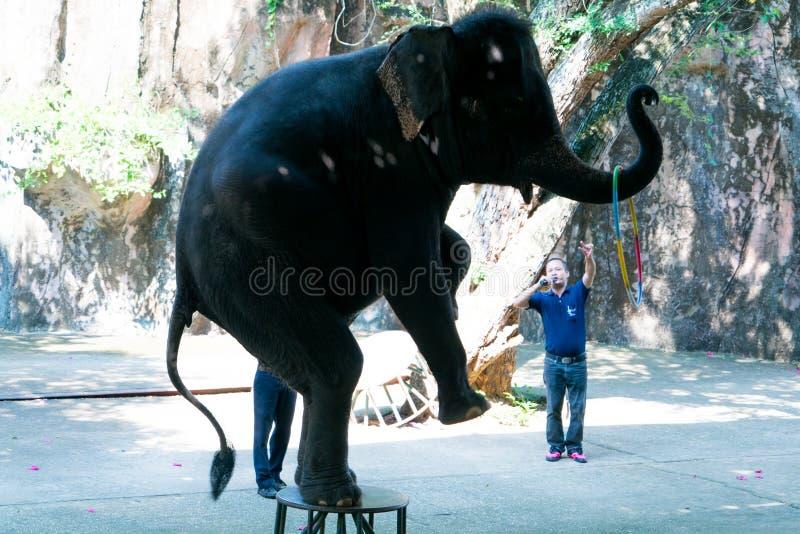 Parque zoológico Chonburi, Tailandia de Siracha septiembre de 2017: elefante que realiza una demostración foto de archivo libre de regalías