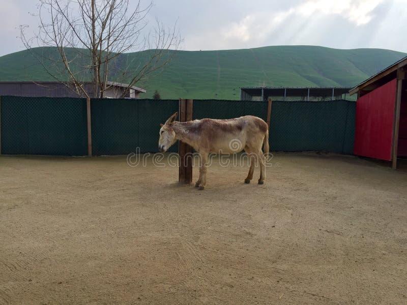 Parque zoológico que acaricia imagenes de archivo