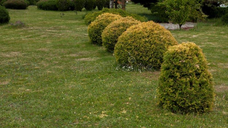Parquee con los arbustos y los céspedes verdes, diseño del paisaje fotos de archivo libres de regalías