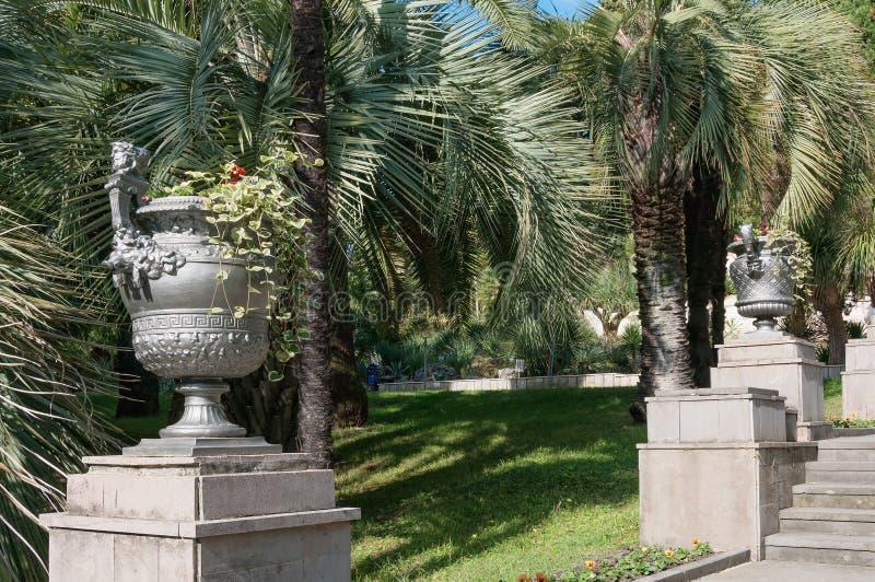Parquee el callejón en el jardín botánico de Sochi, Rusia imagen de archivo