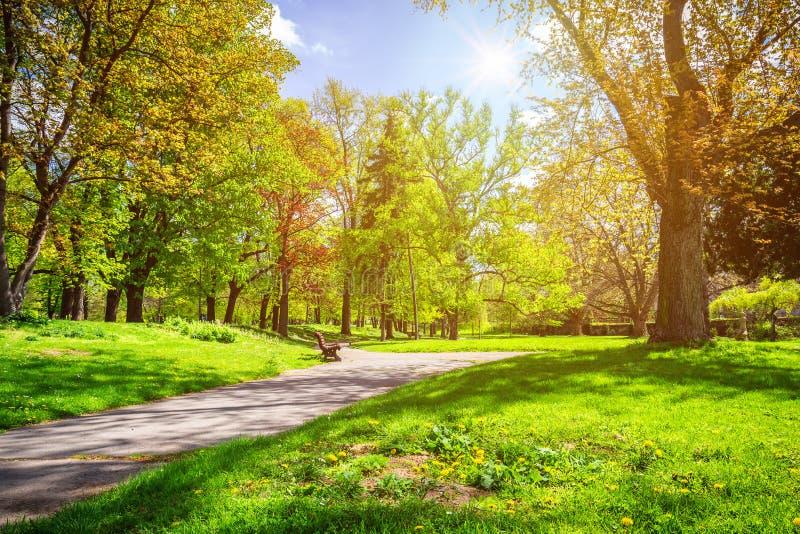 Parquee en la primavera con el césped verde, luz del sol Camino de piedra adentro fotografía de archivo