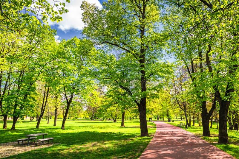 Parquee en la primavera con el césped verde, luz del sol Camino de piedra adentro foto de archivo