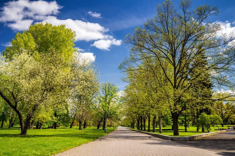 Parquee en la primavera con el césped verde, luz del sol Camino de piedra adentro fotos de archivo