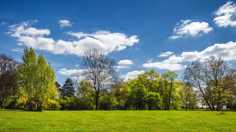 Parquee en la primavera con el césped verde, luz del sol Camino de piedra adentro imagen de archivo libre de regalías